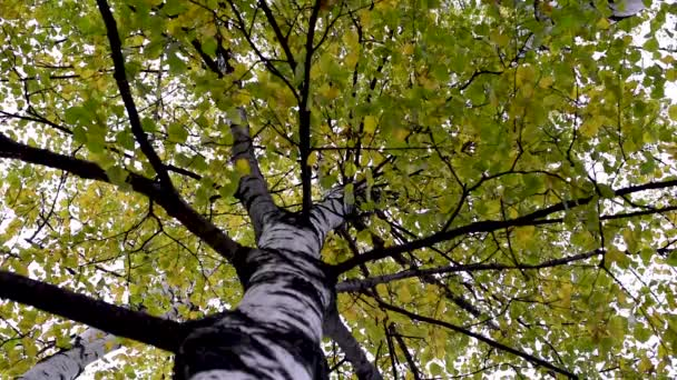 Autumn yellow and green leaves of trees on branches against trunks and sky