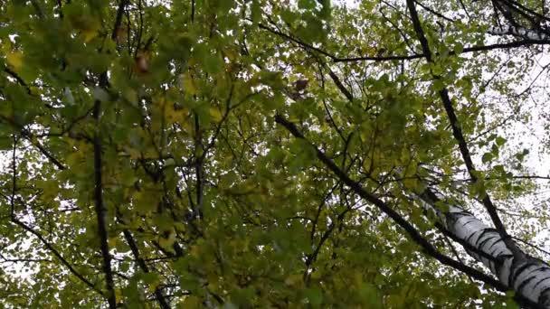 Podzimní žluté a zelené listí stromů na větvích proti kmeny a obloha