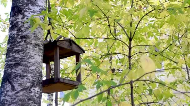 Ptačí krmítko v podzimní větve stromů, čekání na zimu jej vyplnit s jídlem. V zimě ptáci Pojďte a Jezte.