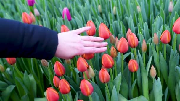 Vysazujeme sazenice s kořeny v rašelině květináčích, vyplňte na zem, aby se otvory v rukou modré rukavice v zemi. Hoďte je v kořenech rostlin