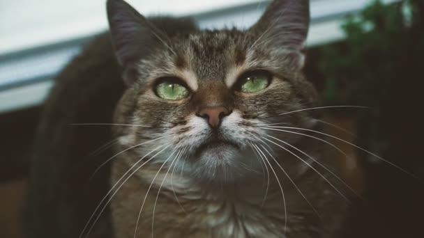 Kočka. Portrét kočky s drzé oči