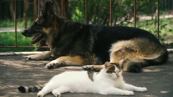 Kočka a pes. Pes a kočka leží vedle sebe