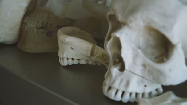 Lidská lebka. Lidská lebka je na stole