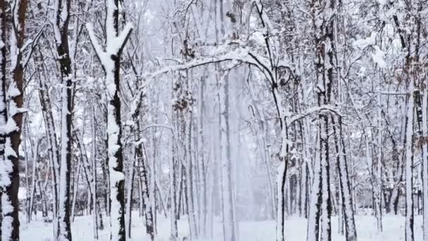 Zima. Zasněžený les. Zima. Zasněžený les
