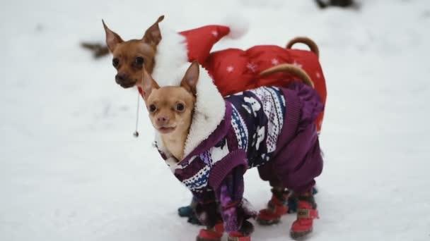 Kutya ruha a hideg.