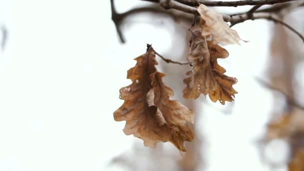 Asciugare appeso a un albero di foglie gialle. Fotogrammi video 25
