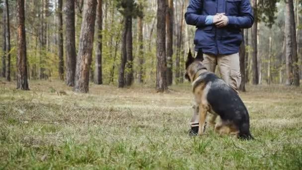 Hundetraining. Schäferhund-Rassehund ausgebildet