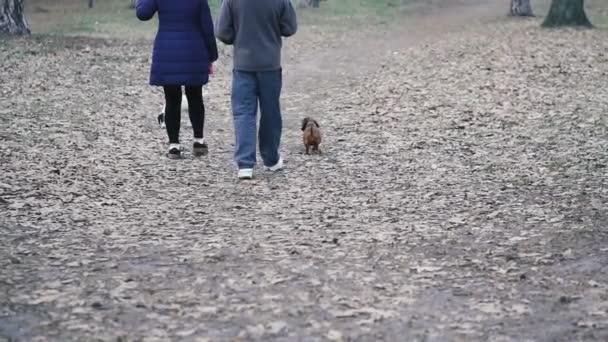 Psí plemeno jezevčíka prochází lesem