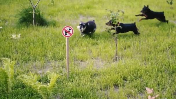 Chůze psů je zakázaná. Na pozadí znamení je zakázáno chodit na psy, aby na trávníku běželi psi