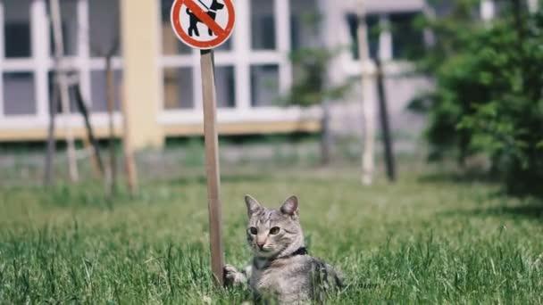 Chůze psů je zakázaná. Kočka leží na trávě u nápis pes chůze je zakázaná