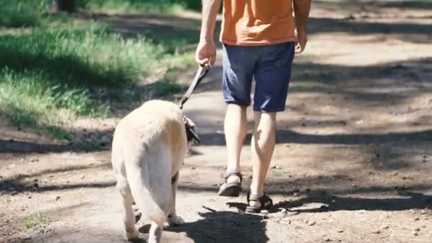 Kutya fajta Francia Bulldog eszik fű