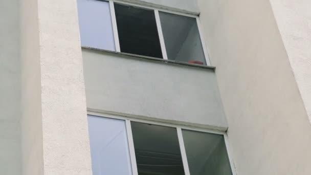 der Hund sitzt im Fenster und schaut auf die Straße.
