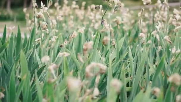 Zöld virágágya. Zöld virágágya virágokkal. Forgatták a videó vezetékek.