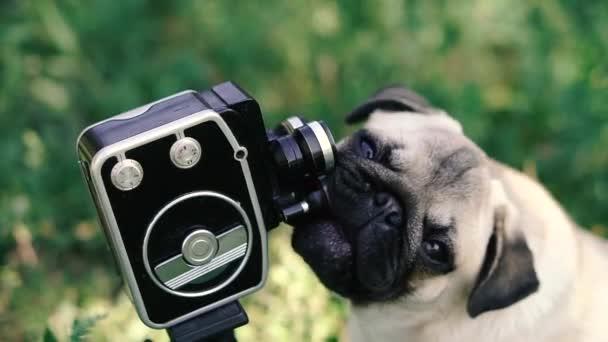 Retro kamera. Pes olizuje retro kameru.