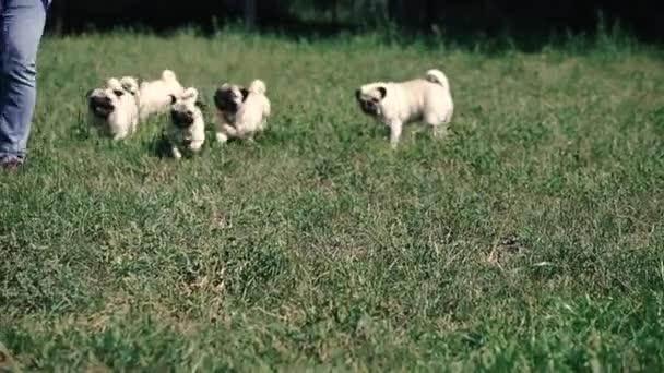 Bogarak. A kutyák az úrnő után futnak..