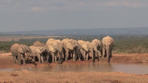 Stádo slonů pitné vody v národním parku Amboseli, Keňa.