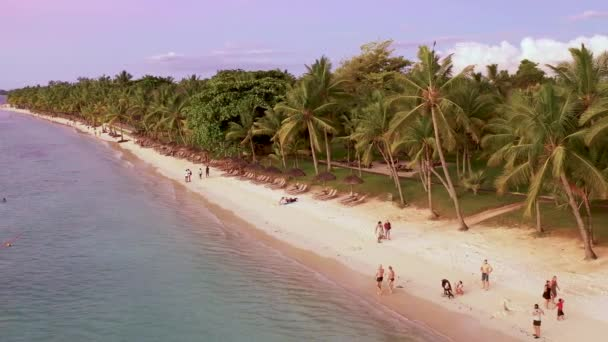 Aerial drone shot in sunny day time. Close up fly over palm trees mangrove forest and beautiful beach lagoon. Located in martinique.