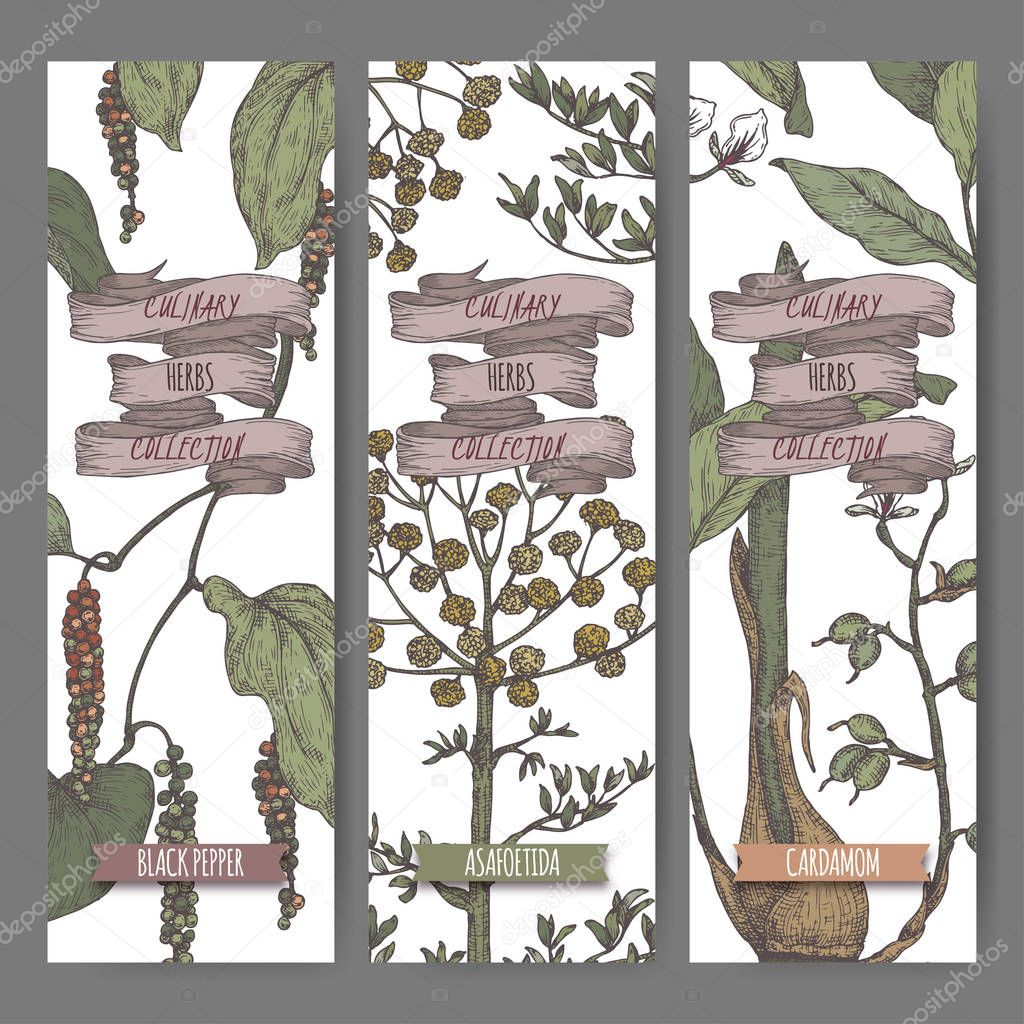 Three color labels with Syrian oregano, sumac and nutmeg sketch.