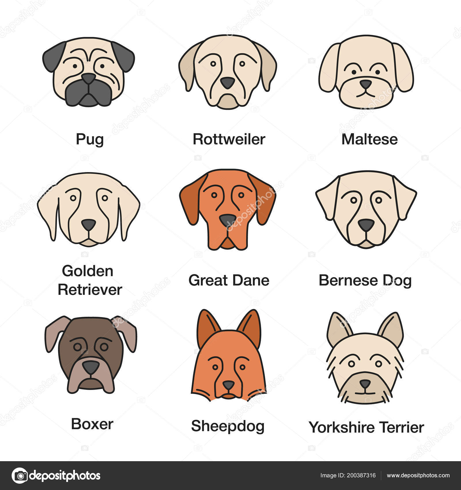 Dogs Breeds Color Icons Set Pug Rottweiler Maltese Golden Retriever
