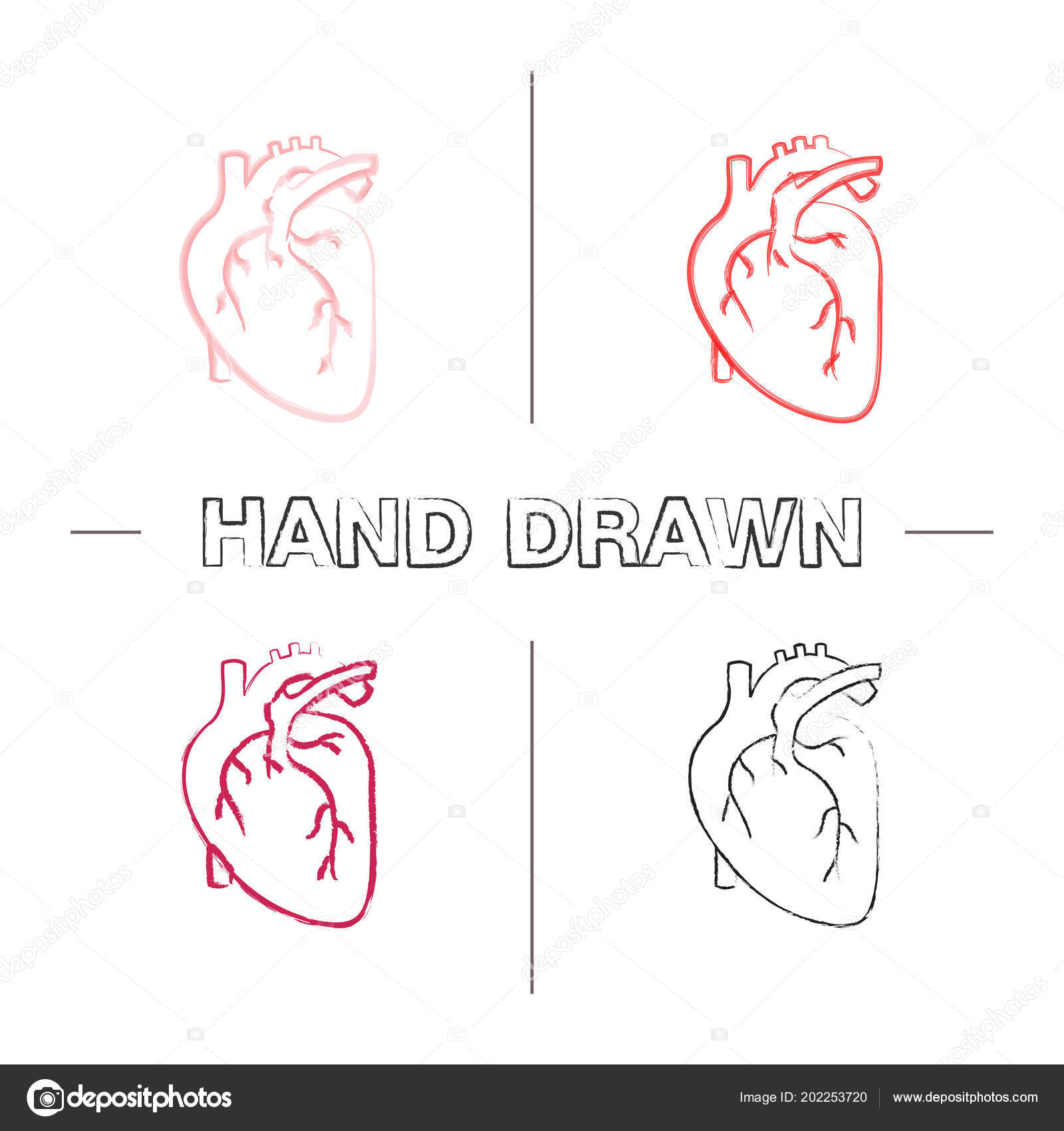 Human Heart Anatomy Hand Drawn Icons Set Color Brush Stroke Stock