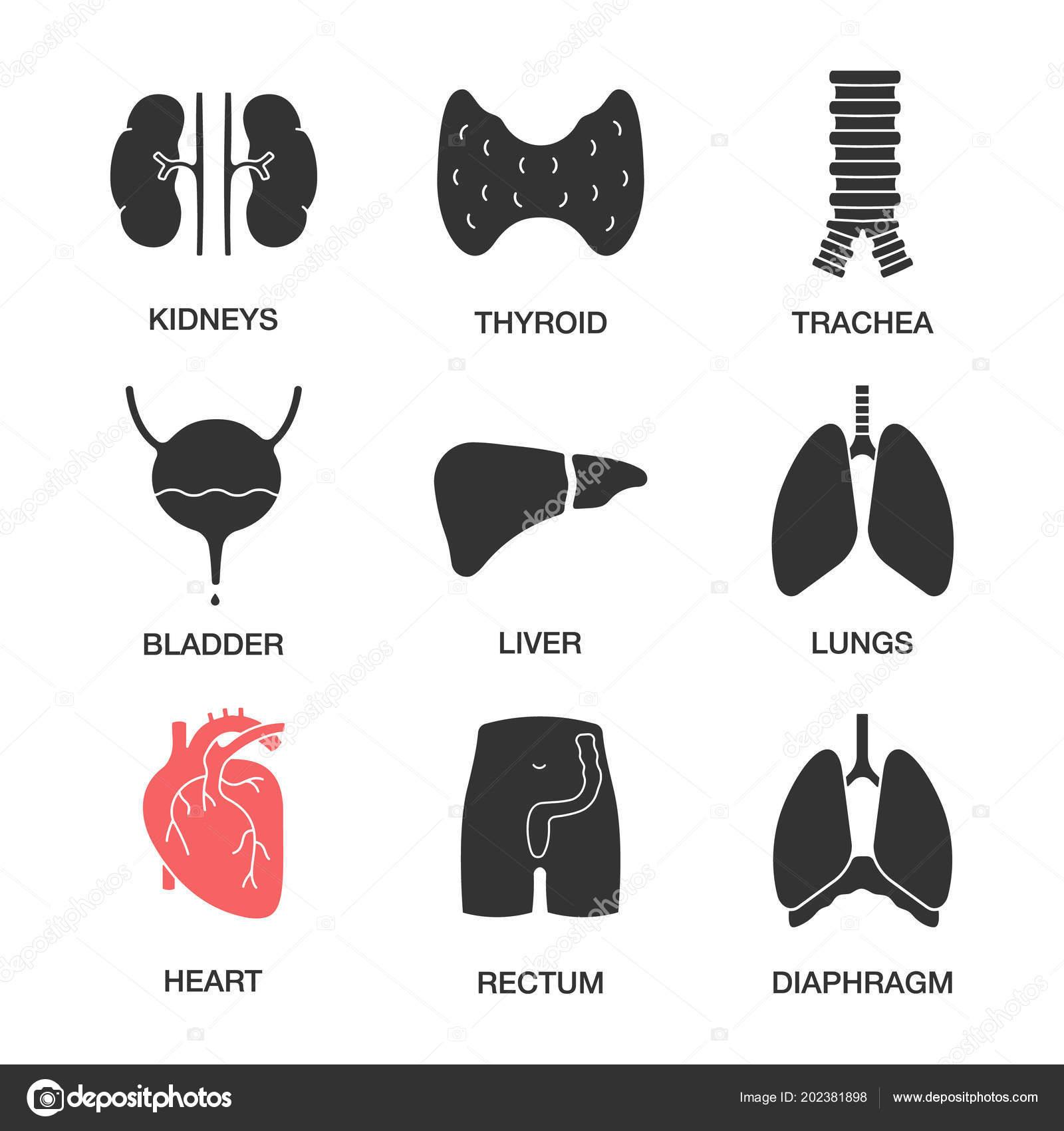 Schilddrüse harndrang