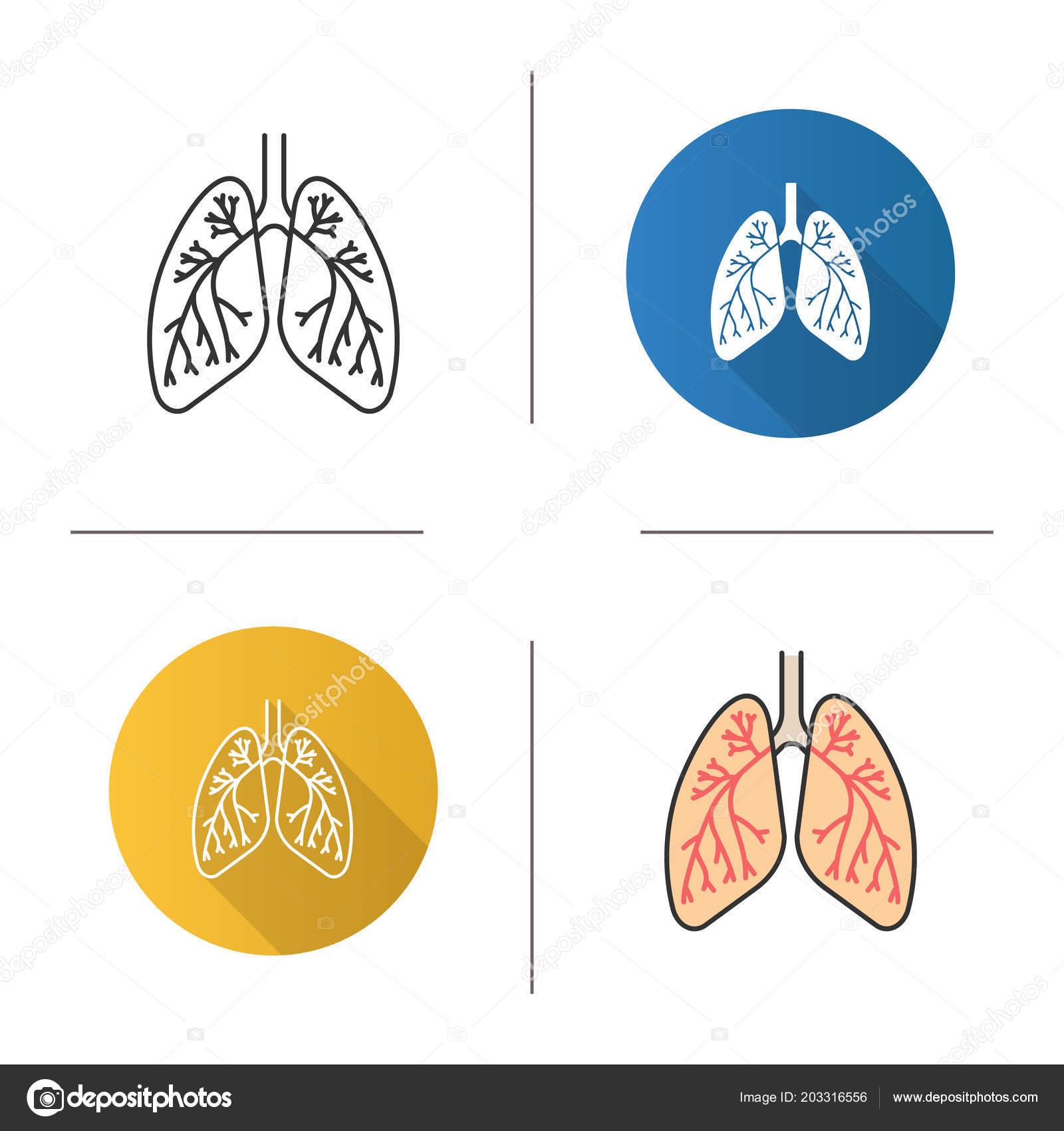 Human Lungs Bronchi Bronchioles Icon Respiratory System Anatomy Flat