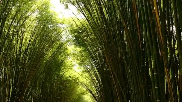 Top pohled na malebný bambusový les využívaný jako obnovitelný udržitelný zdroj energie a různé druhy ekologicky šetrných ekologických výrobků