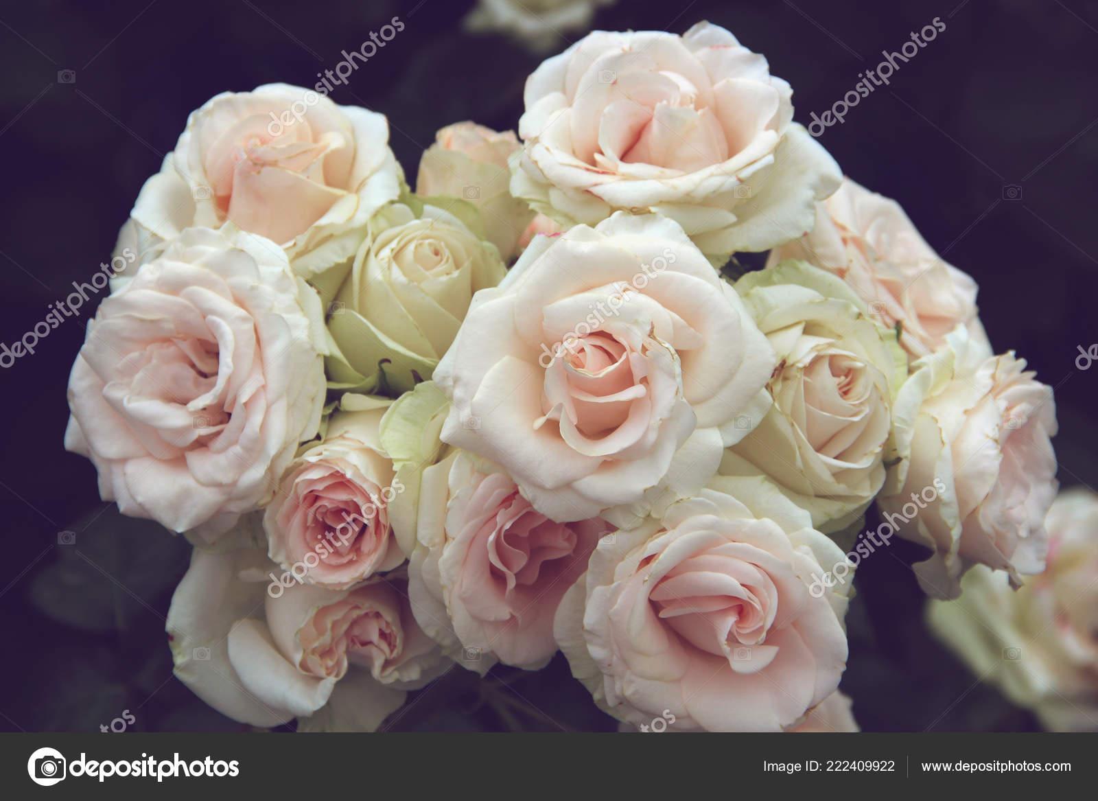 Inflorescence Light Pink Roses Bouquet Garden Flowers Dark Background Toning Stock Photo C Balagur 222409922