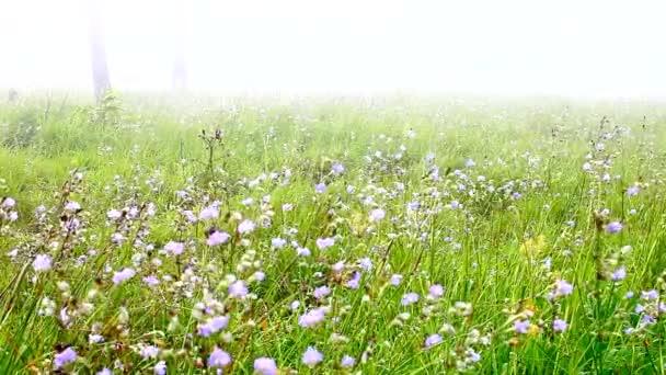 Édes lila virágok mező erdőben esős évszakban a hegyen