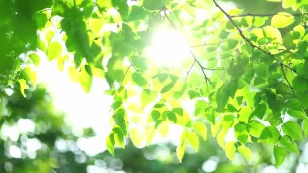 Közelkép a napsütéssel mozgó levélről a parkban