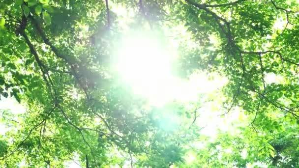 Zblízka list pohybující se se sluncem v parku