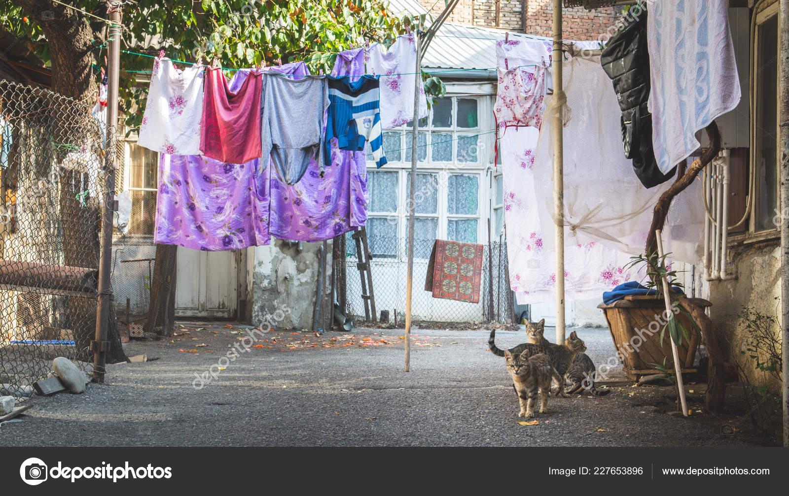 Katzen Sitzen Auf Dem Boden Im Garten Mit Bunten Wäscheständer An