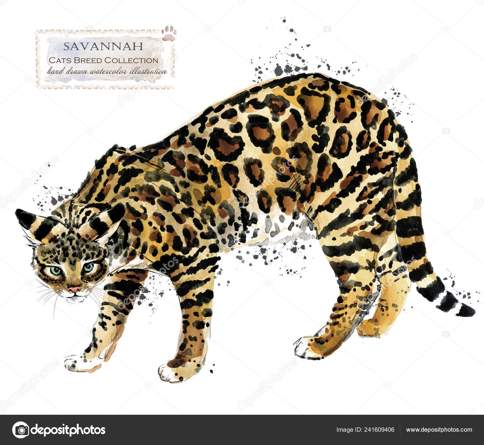 Gatto Savannah Illustrazione Dell Animale Domestico Dell Acquerello