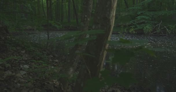 4K - A lake in a quiet morning forest, slow motion