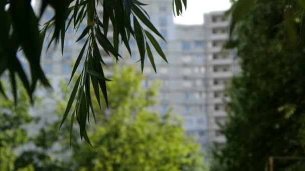 Zelené listy, kymácející se venku v pomalém pohybu.