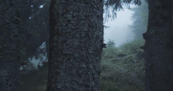 Obrovské smrkové stromy a travnatý trávník mezi nimi v Karpatech