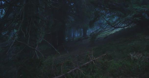 Kouzelné smrky a travnaté skvrny mezi nimi v Karpatech v slo-mo