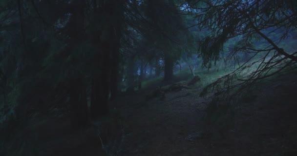 Tmavé smrkové stromy a hadí kořeny mezi nimi v Karpatech v slo-mo