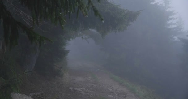 Forest lawn covered with dense fog in the Carpathians in autumn in slo-mo