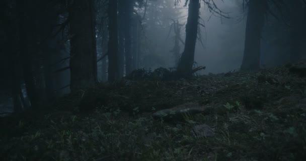 Sötét lucfenyő erdő, mely kígyószerű gyökerekkel és magas fákkal borított a Kárpátokban