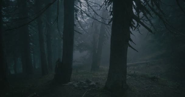 Sinister pine wood covered with curvy roots and high trees in the Carpathians