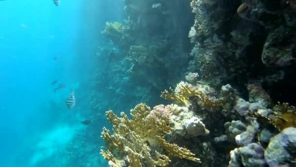 Úžasný korálový útes v podmořské oblasti-akce v Rudém moři.