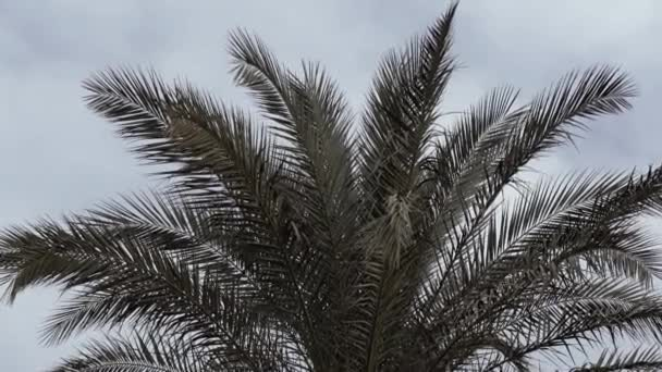 Palm tree on sky background in slow motion.