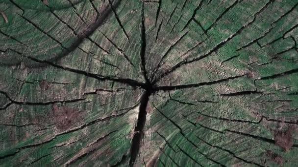 Spin Shot - Holzstruktur mit alter grüner Farbe.