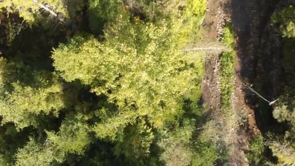 Aerial shot of a mountaneous brook with sparkling water and a tree in summer