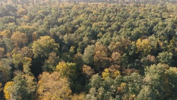 Letecká střela zeleného lesa v Karpatských horách za slunečného dne