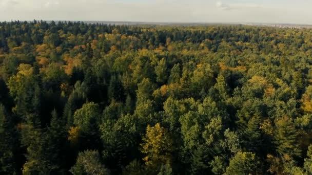 Vzdušný záběr pohádkové zelené dřevo v Karpatských horách v létě