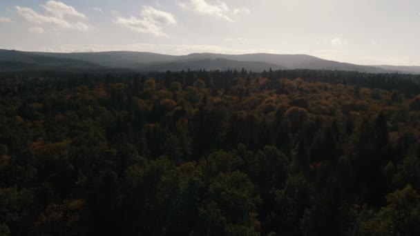 Aerial shot of the beautiful spruce forest the Carpathian Mountains at sunset.