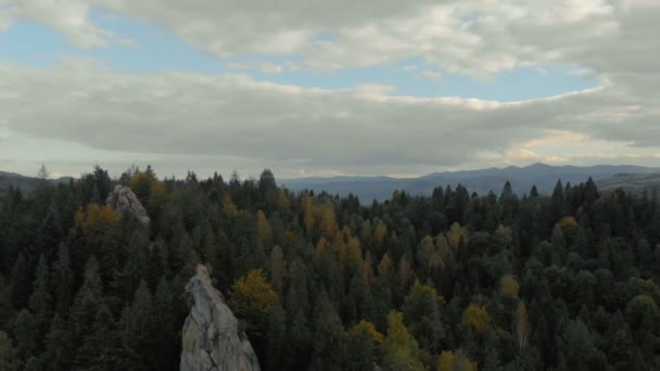 Spruce forest sea covering the horizonless Carpathians on cloudy day in summer
