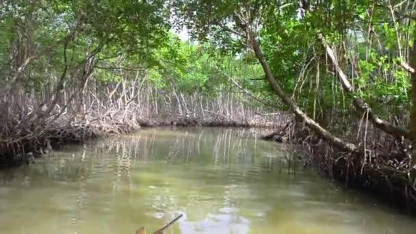 Mangrovové stromy podél řeky. Kořeny mangrovových stromů v mangrovových lesích v tropickém lese